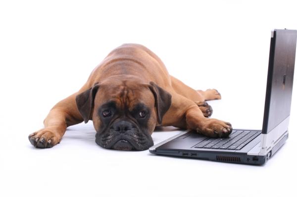 Bored-Dogs.jpg